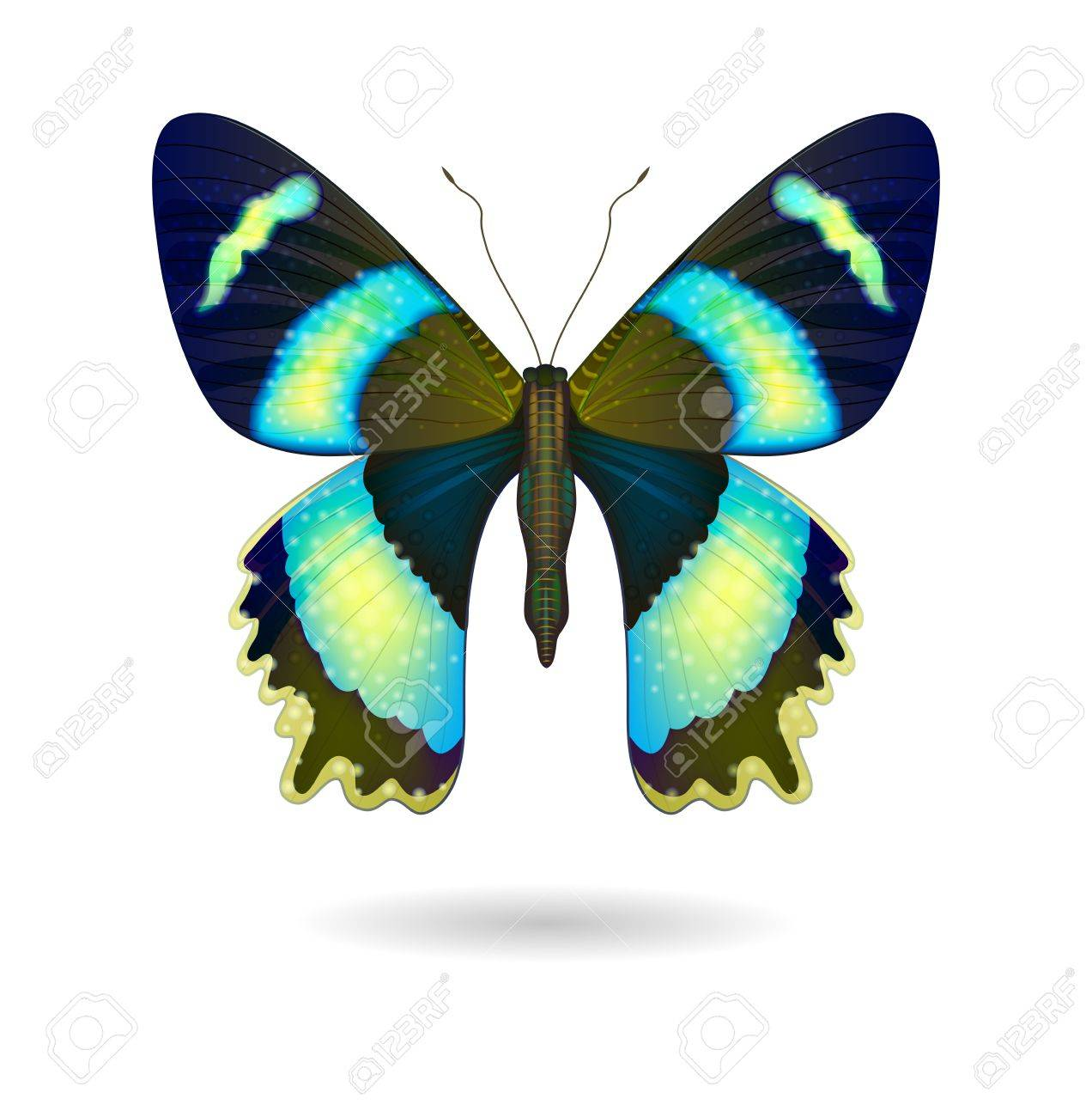 Vector beautiful bright Butterfly isolated. - 42039578