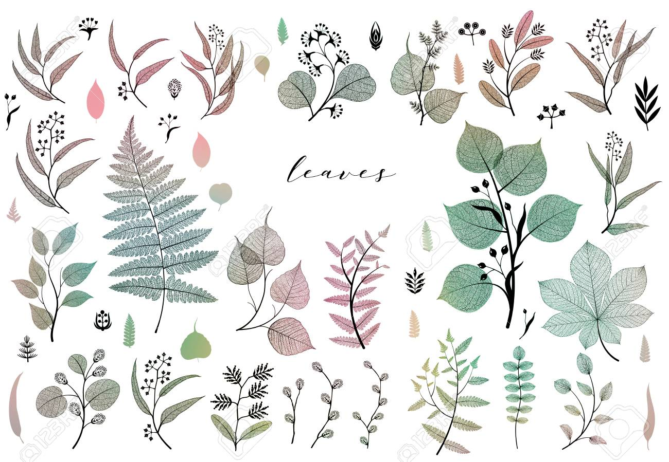 Branches and leaves, fall, spring, summer. Vintage botanical illustration, floral elements in colorful - 109979422