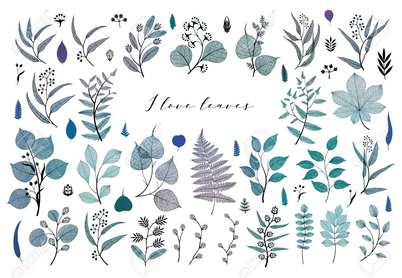 Branches and leaves, fall, spring, summer. Vintage botanical illustration, floral elements in blue color design - 109979424