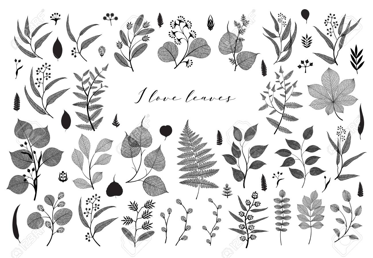 Big set of branches and leaves, fall, spring, summer. Vintage botanical illustration, floral elements in black design on white background - 109979425