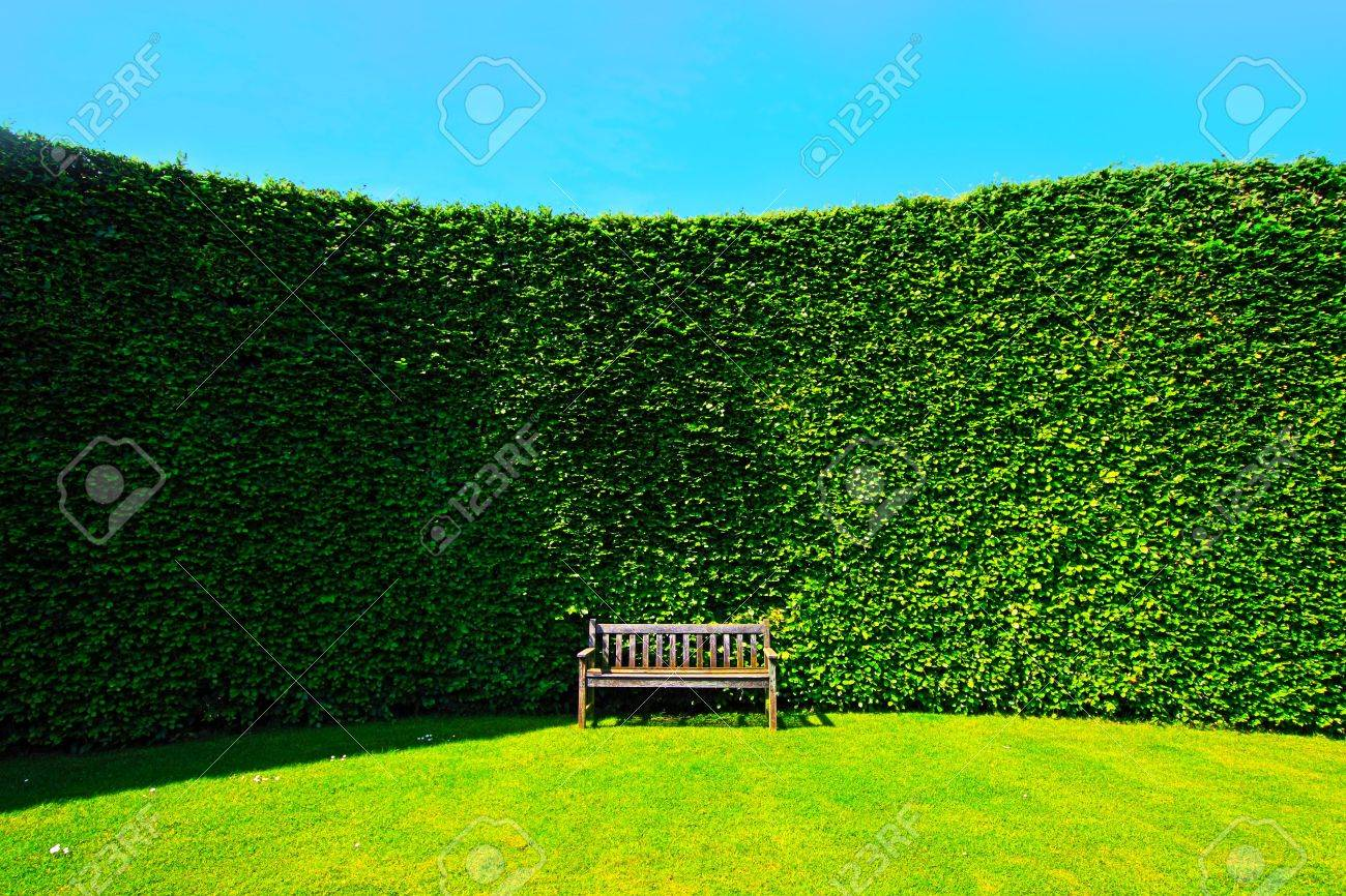 Garden Hedges With A Wooden Bench Stock Photo Picture And Royalty