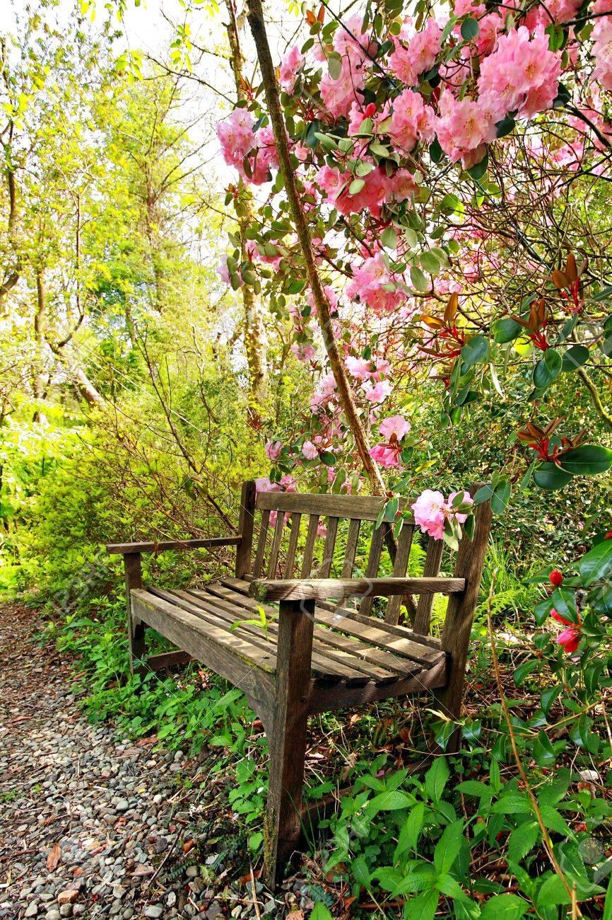 Beau jardin romantique avec banc de bois et les arbres azalée
