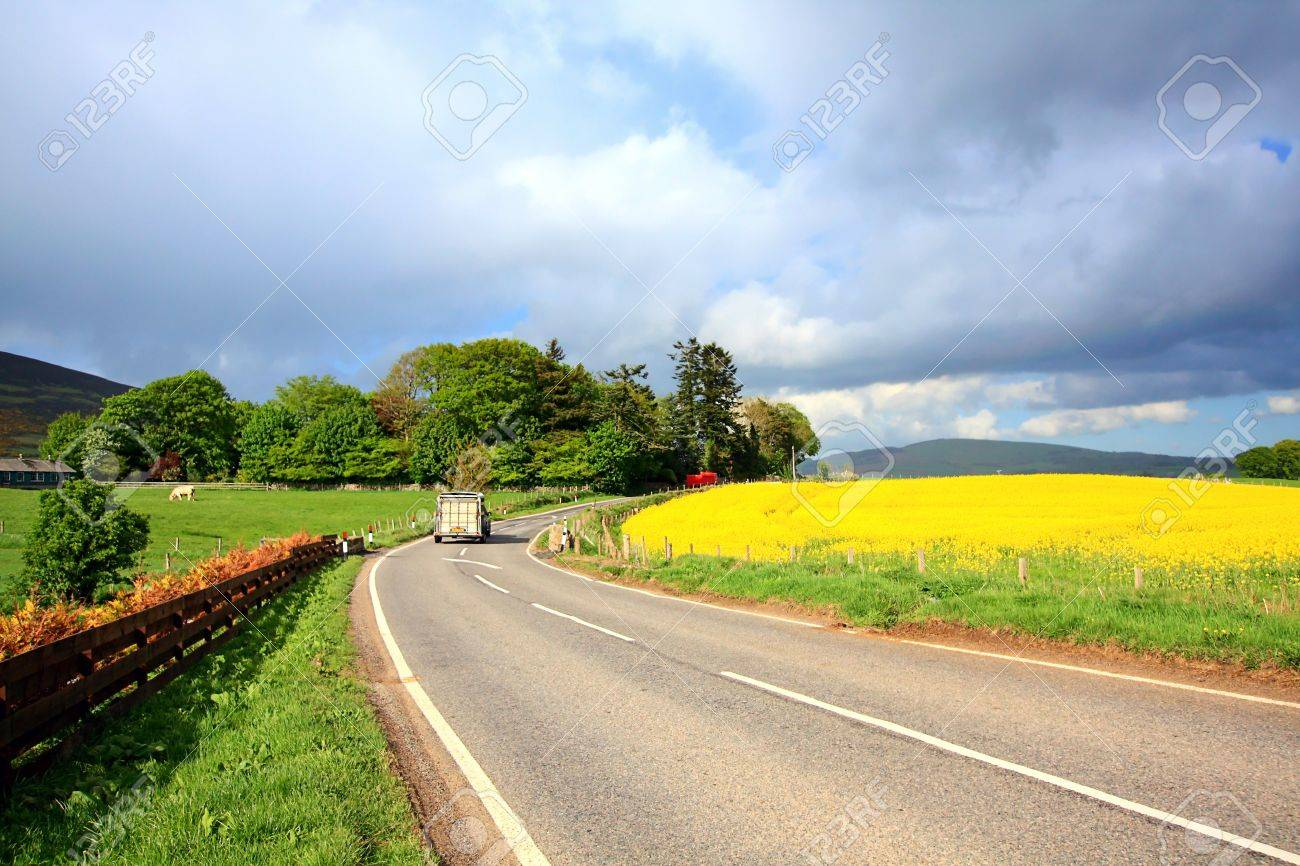 Rural Scottish road with fields of rape, on sunny day Stock Photo - 13717746