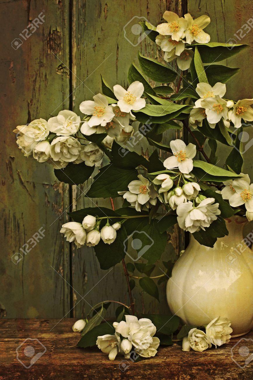 Jasmine flowers in a vase vintage style Stock Photo - 21158660