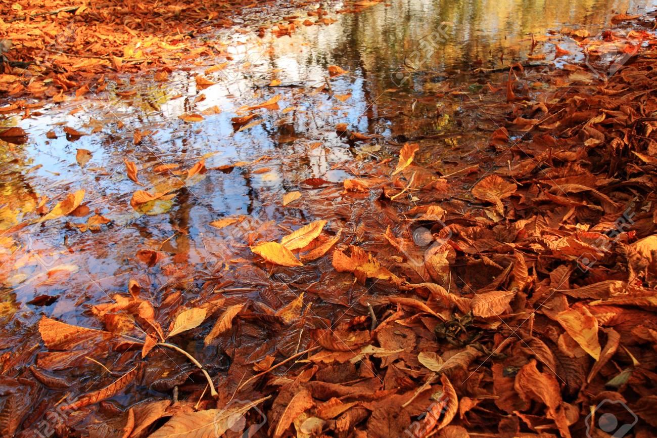 Schöne Herbstliche Landschaft Im Park Lizenzfreie Fotos, Bilder Und ...