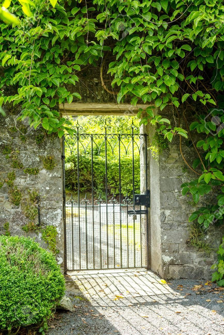 美しい古い庭の門は、緑のツタに...