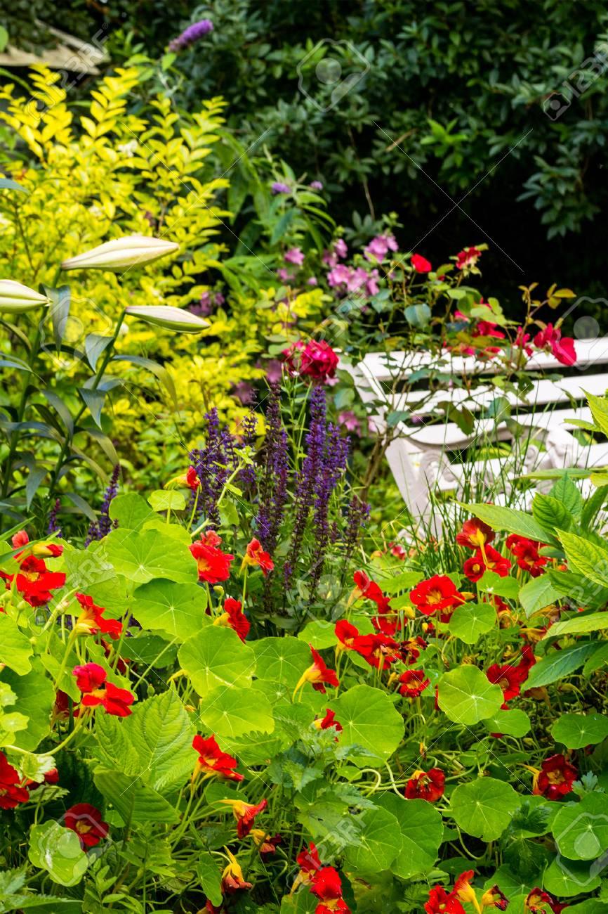 Beau Jardin Romantique Avec Une Variété De Fleurs épanouies, L\'été ...