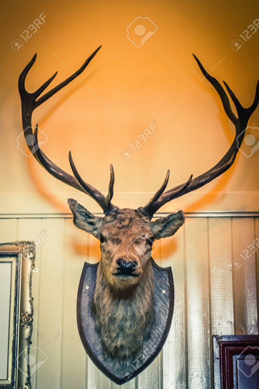 Stuffed Deer Head On The Wall Stock Photo, Picture And Royalty Free ...