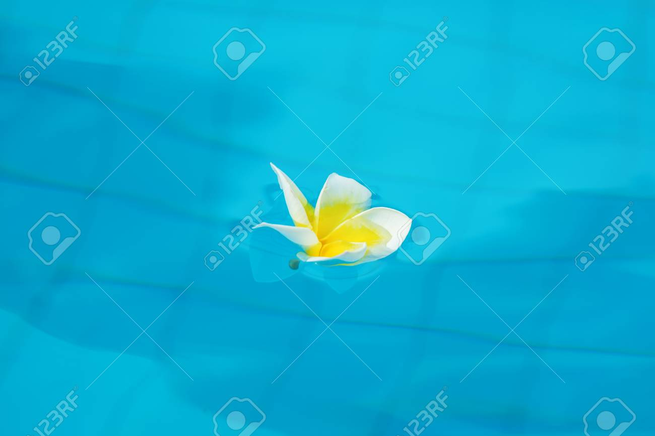 Beautiful tropical flowers float on the surface of the water beautiful tropical flowers float on the surface of the water bright expressive flower in the izmirmasajfo