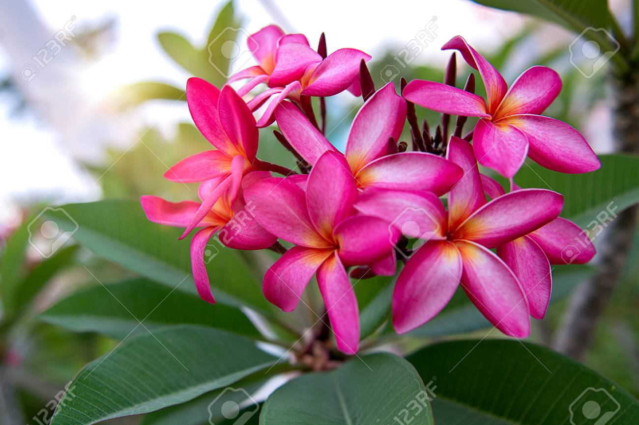 A lot of beautiful colourful flowers growing in the tropics a lot of beautiful colourful flowers growing in the tropics exotic rare flowers izmirmasajfo