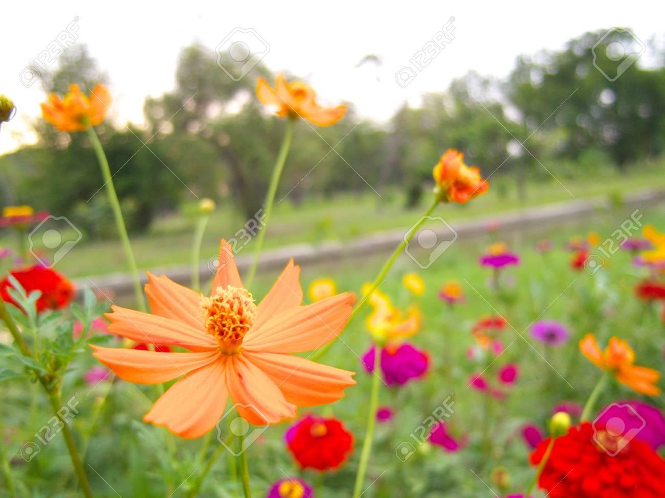 Joli Jardin Fleuri Avec Coloré Banque D\'Images Et Photos Libres De ...