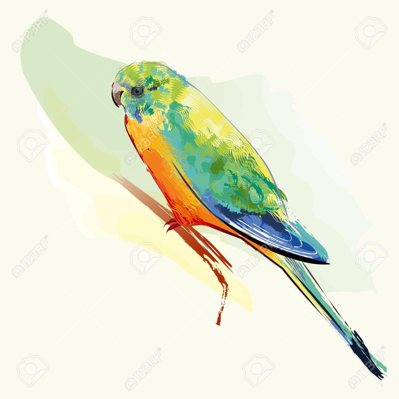カラフルな羽のインコ鳥のイラスト素材 ベクタ Image 9827104