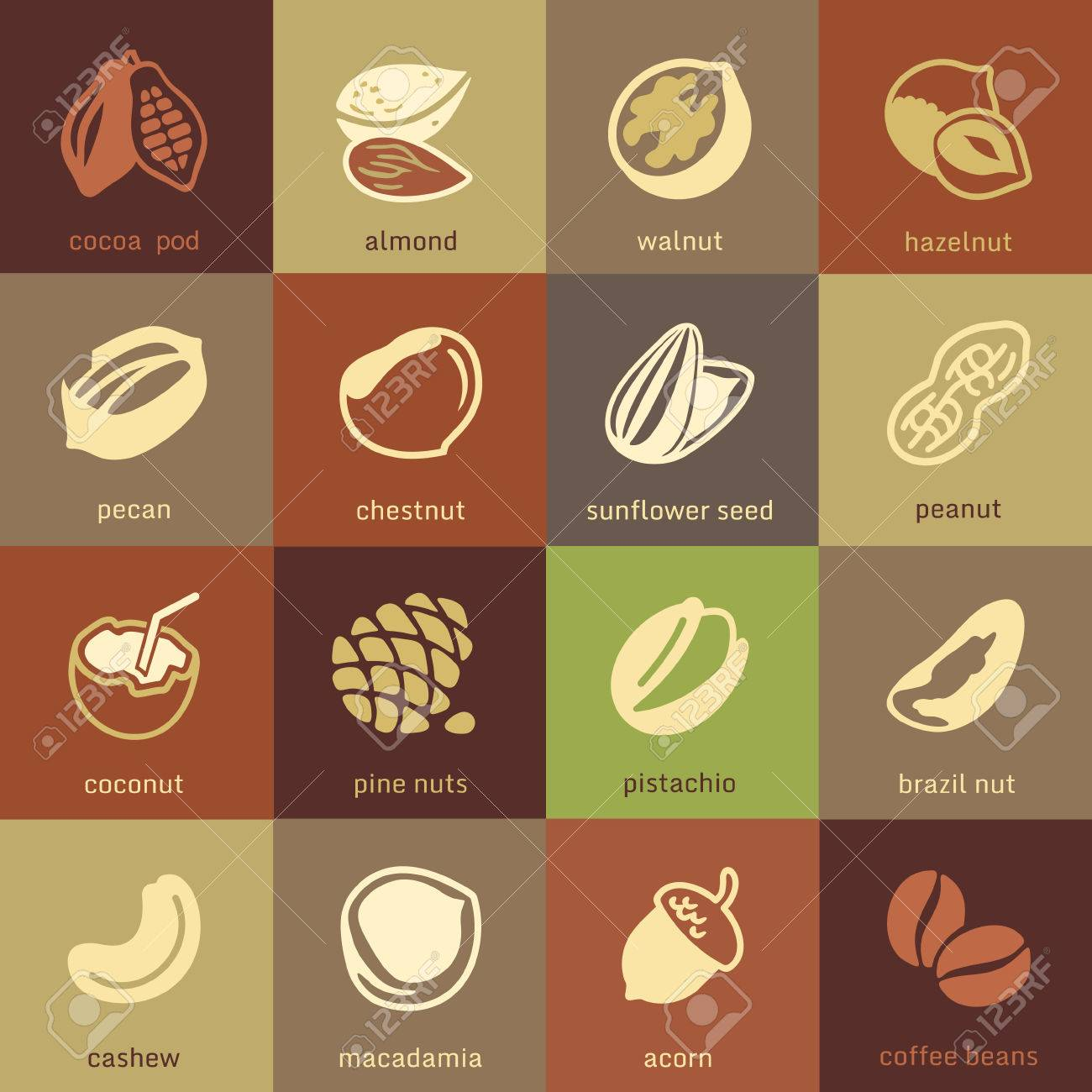 Web icons collection - nuts, beans and seed - 35616432