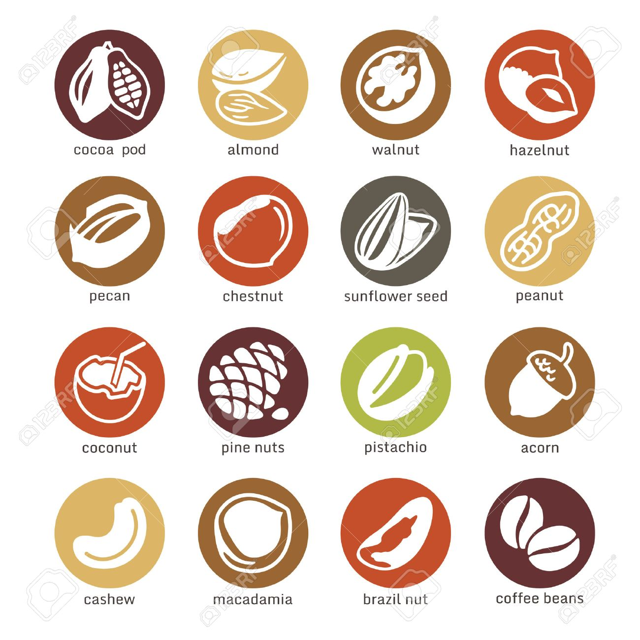 Web icons collection - nuts, beans and seed - 35616435