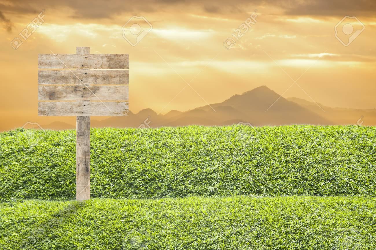 Wooden billboard on the grass background Stock Photo - 13892642