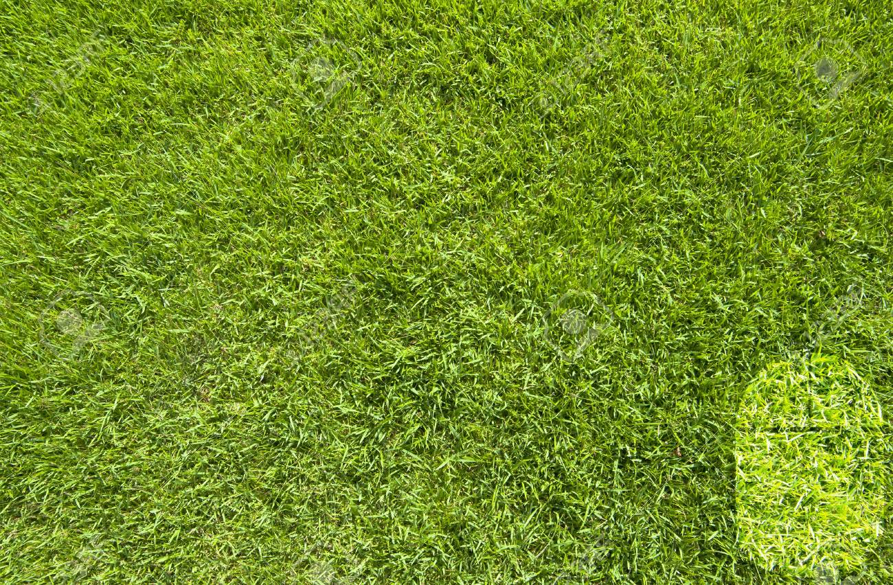 Mouse icon on green grass background Stock Photo - 17195704