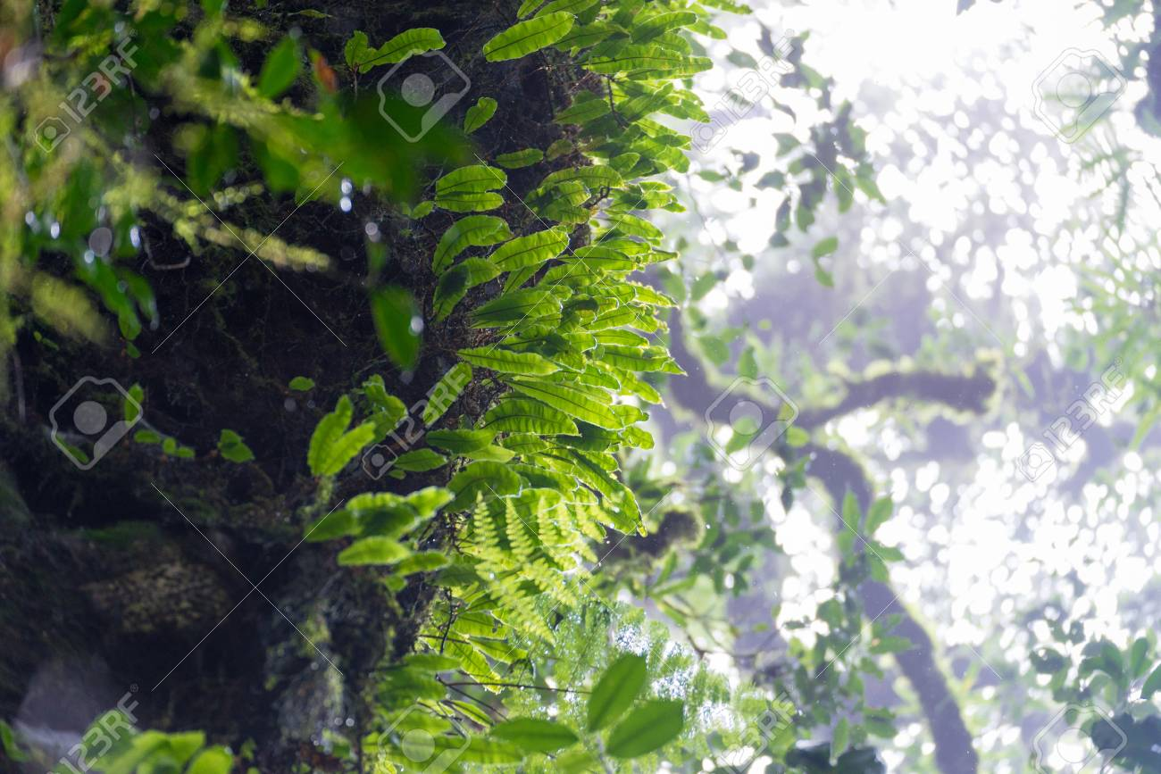 Plants In Tropical Evergreen Forest Located On High Altitude Stock Photo Picture And Royalty Free Image Image 45027906 The conditions of this biome. 123rf com