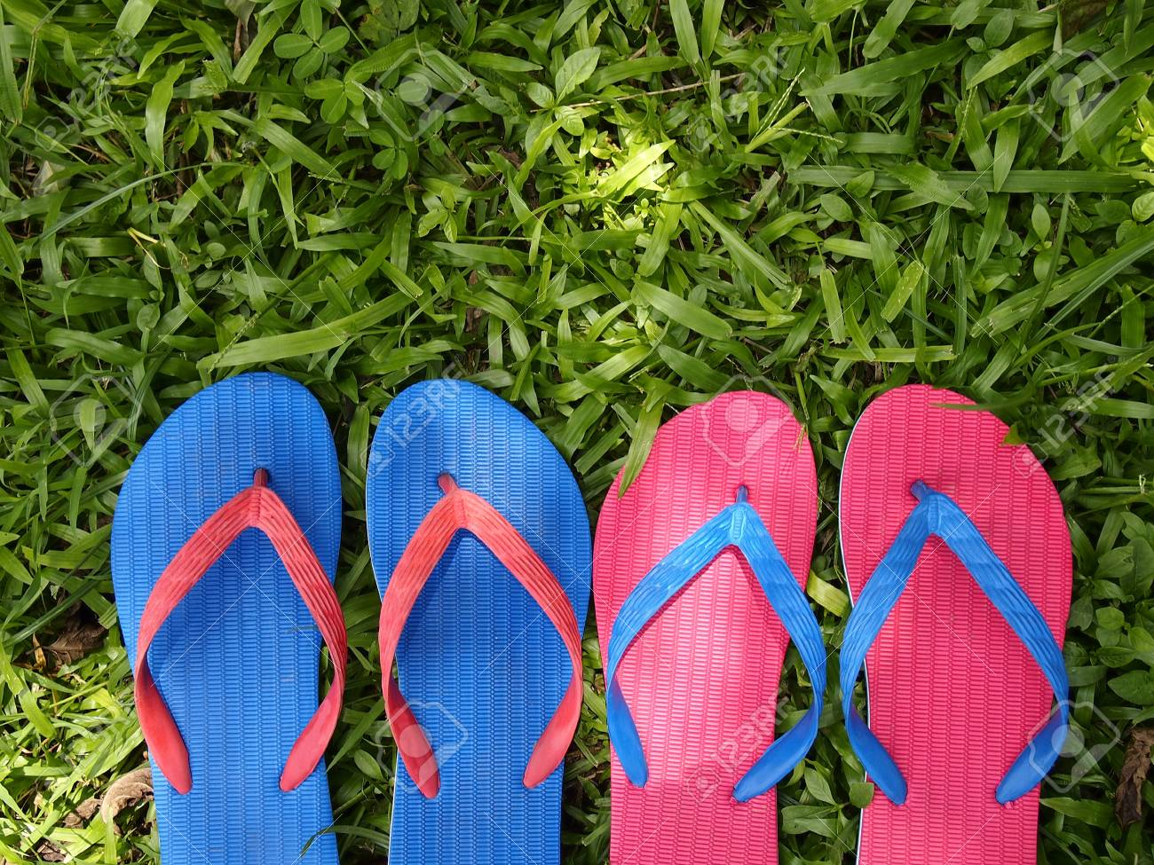 54a484933440 Colorful rubber slippers or flip flops on fresh green grass Stock Photo -  64559467