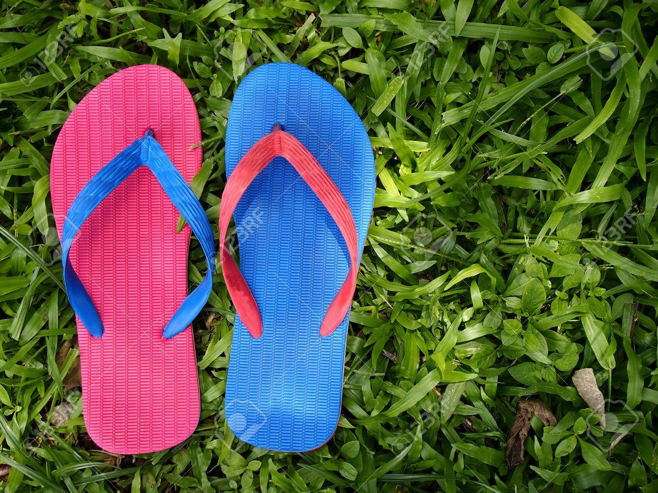 5a55fafd50e4 Colorful rubber slippers or flip flops on fresh green grass Stock Photo -  64559486