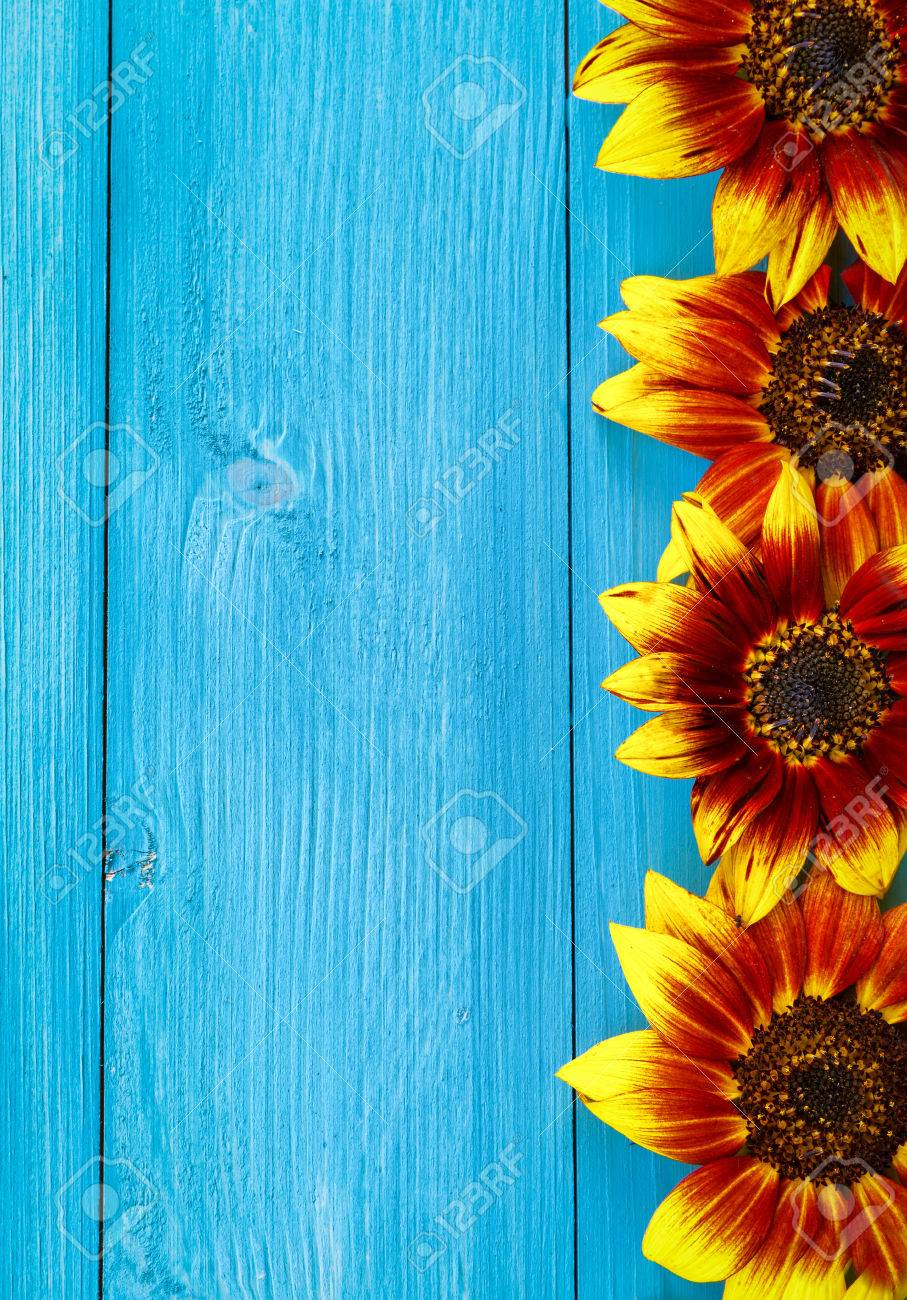 Vintage Blue Boards With Sunflowers Background Copy Space Stock