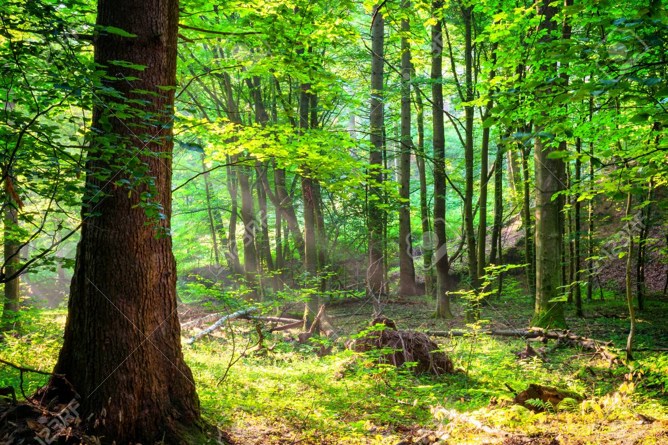 Stock photo wild green peaceful forest landscape in the summer