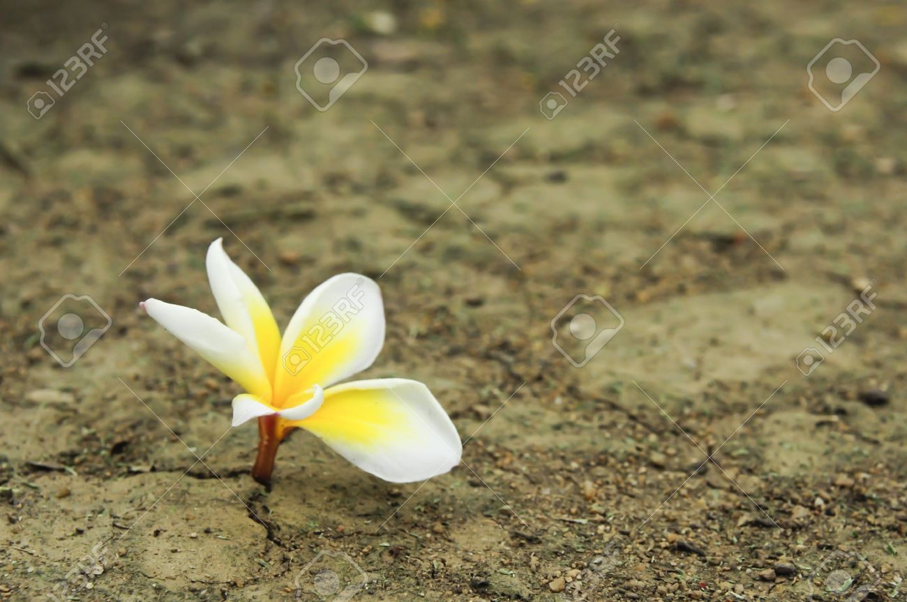 flower in dried cracked soil Standard-Bild - 9184942