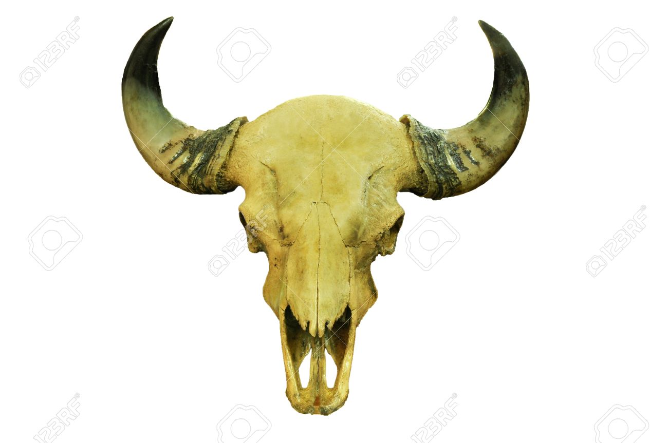 Buffalo Skull Stock Photo, Picture And Royalty Free Image. Image ...