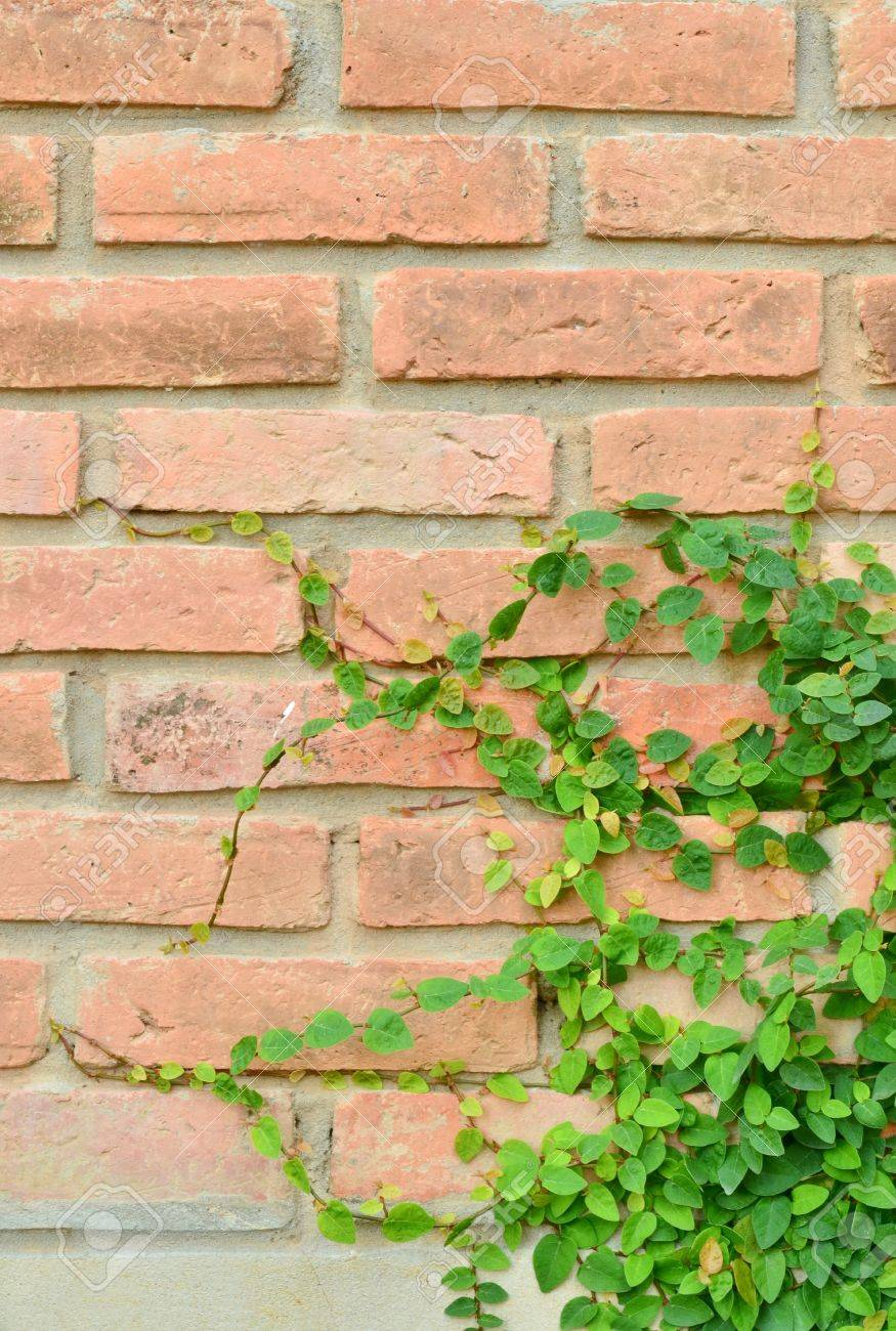 Green plant on brick wall Stock Photo - 12250983