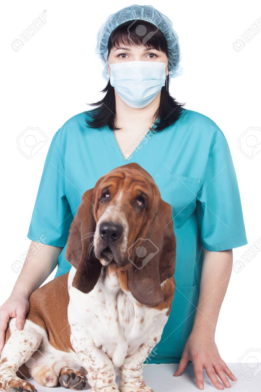 Female vet with a dog isolated Stock Photo - 17194235