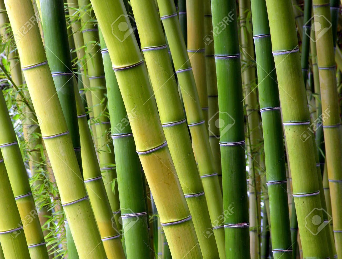 Bunte Grunen Baumen Und Bambus Ein Japanischer Garten Rich Grunen