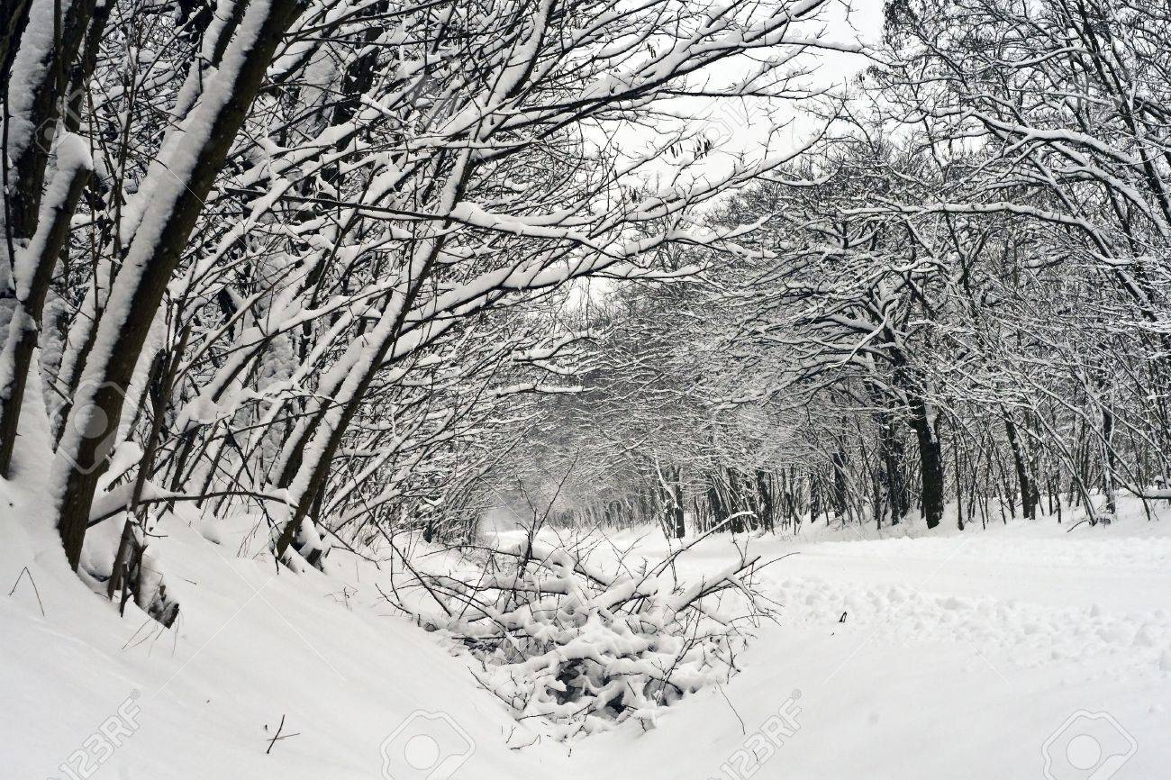 Snowy winter road in the woods. Stock Photo - 6355092