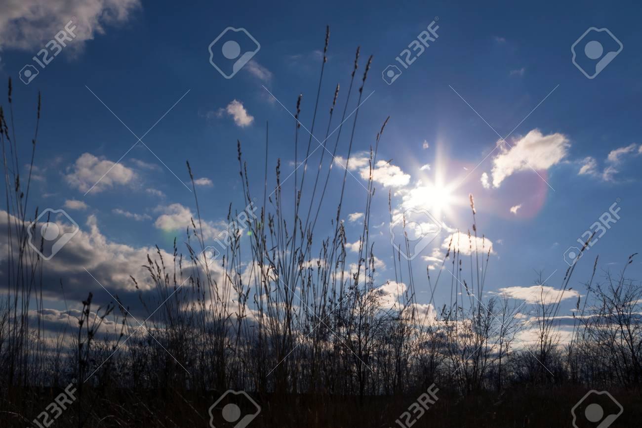 前景草の穏やかな日差しの中 の写真素材・画像素材 Image 13278805.