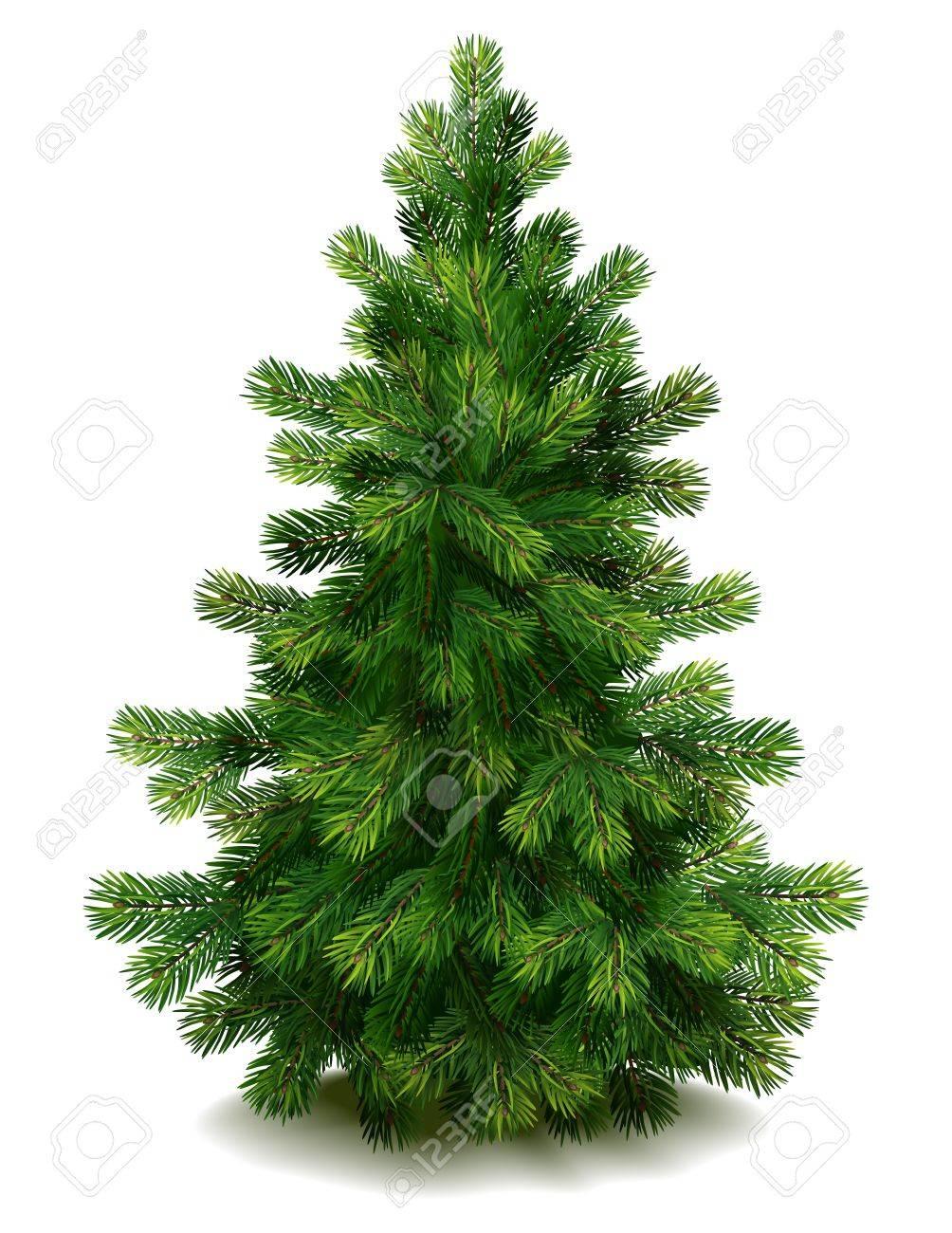 Vector illustration - pine tree on white background - 10627294