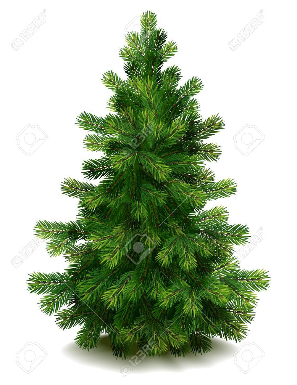 Vector illustration - pine tree on white background Stock Vector - 10627294