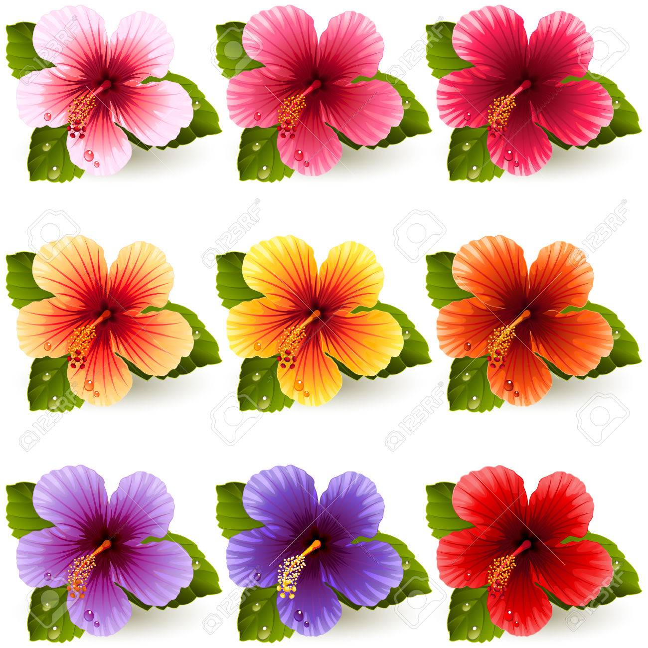 Set of colorful hibiscus flowers royalty free cliparts vectors and set of colorful hibiscus flowers stock vector 29426037 izmirmasajfo