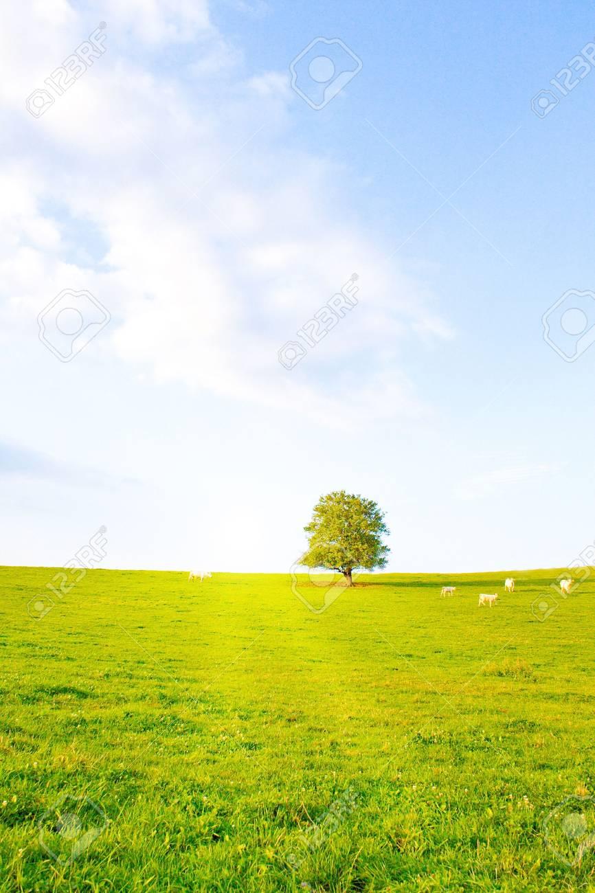 Idyllische Wiese mit Baum Stock Photo - 5714074