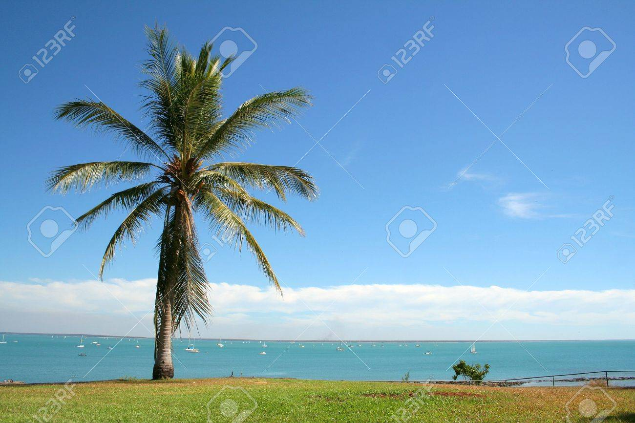 View over a bay and palmtree in Darwin, Australia Stock Photo - 6501588