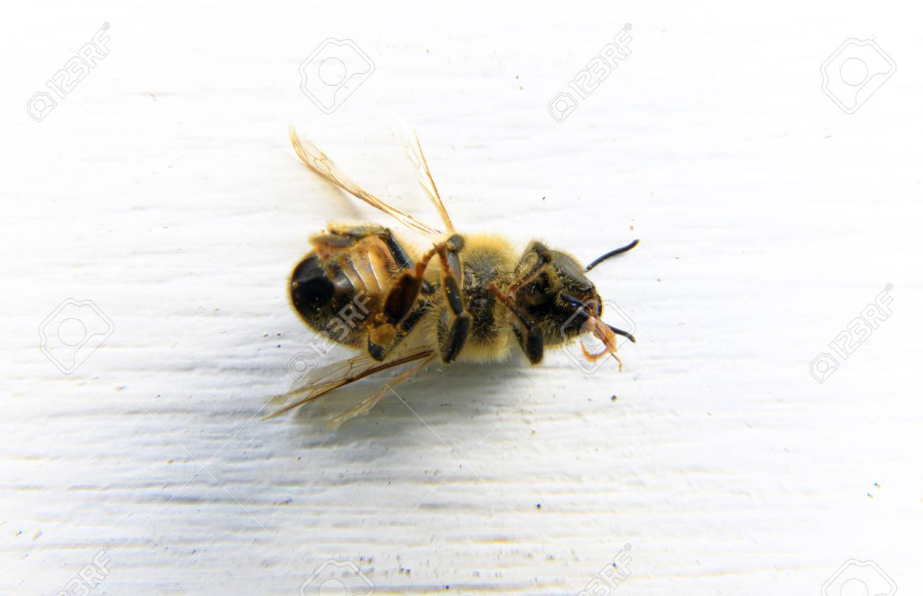 Image result for DEAD BEE
