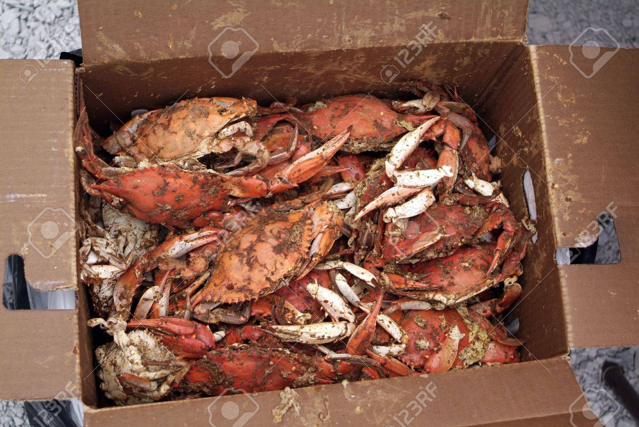 Box Of Seasoned And Steamed Maryland Blue Crabs Stock Photo
