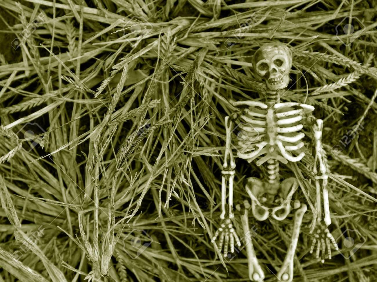Spooky Autumn skeleton background Stock Photo - 4237545