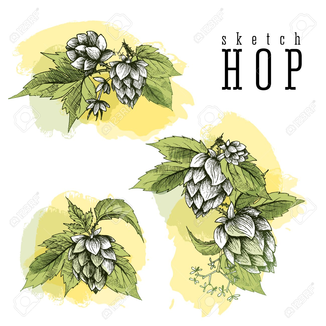 Beer hops set of 3 hand drawn hops branches with leaves cones and beer hops set of 3 hand drawn hops branches with leaves cones and hops flowers voltagebd Image collections