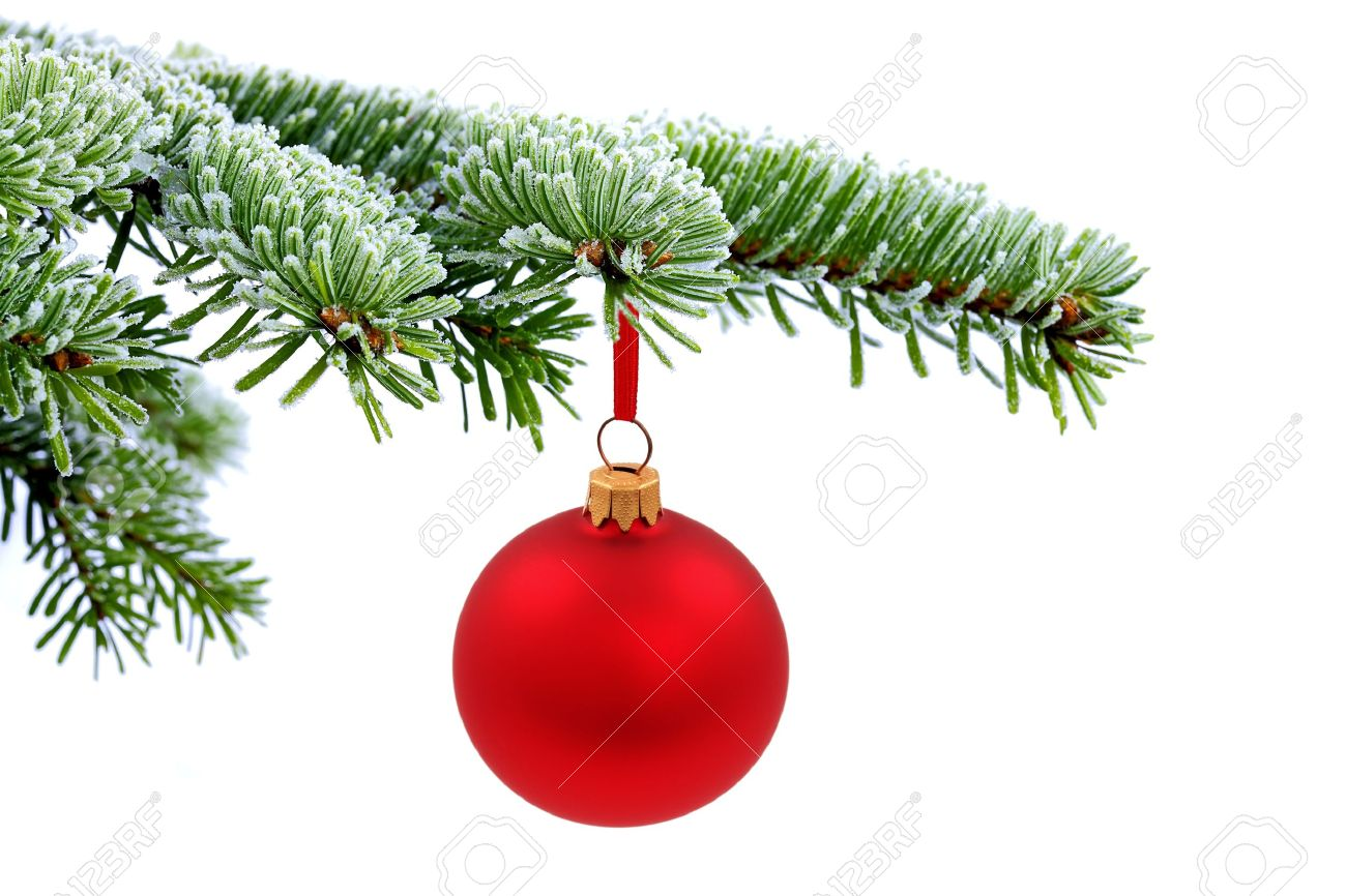 Red glass ball ornaments - Christmas Evergreen Spruce Tree And Red Glass Ball Stock Photo 10469443
