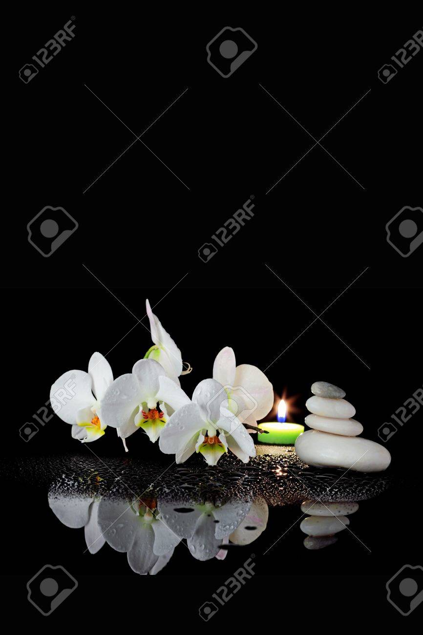 day spa decor white orchid with drop of dew on black background nature and: day orchid decor