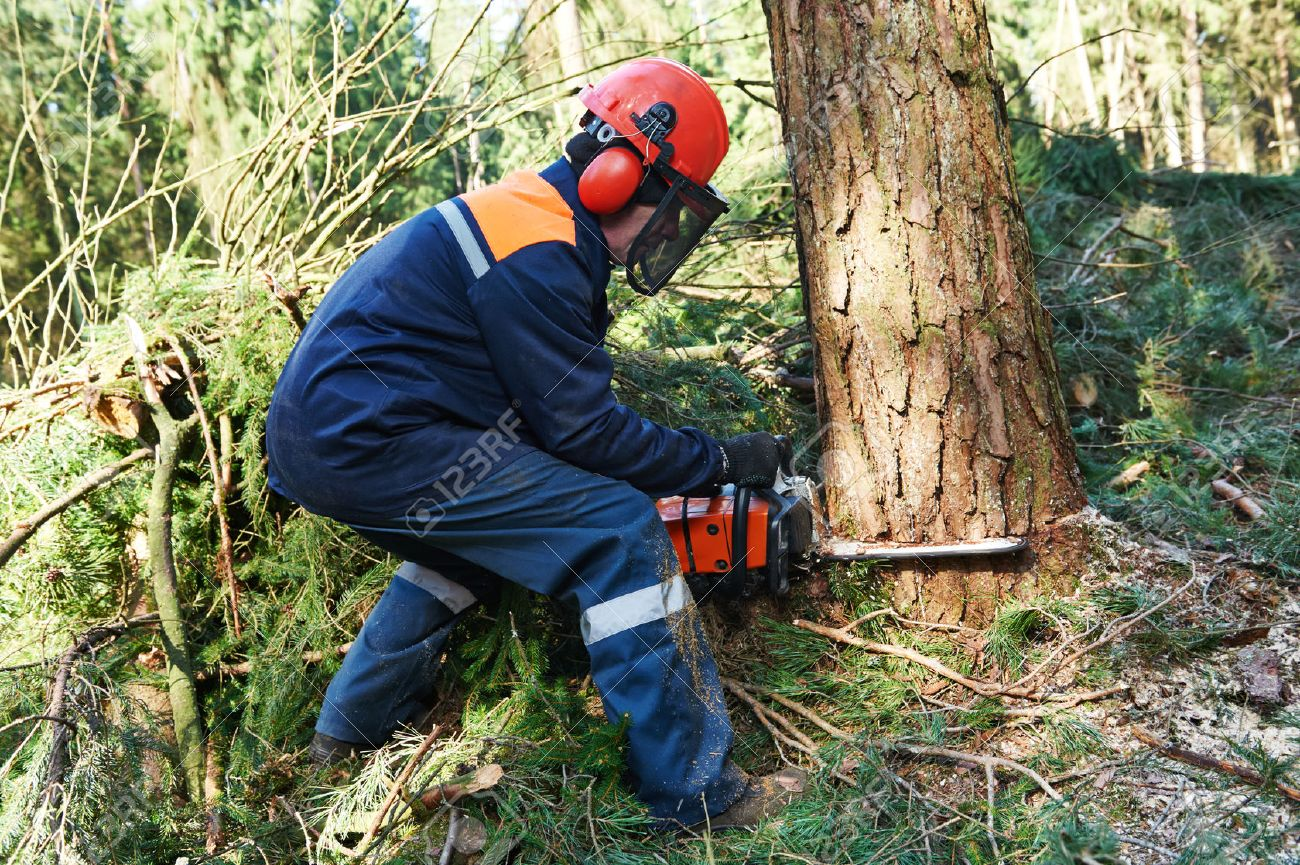 lumberjack logger worker in protective gear cutting firewood stock