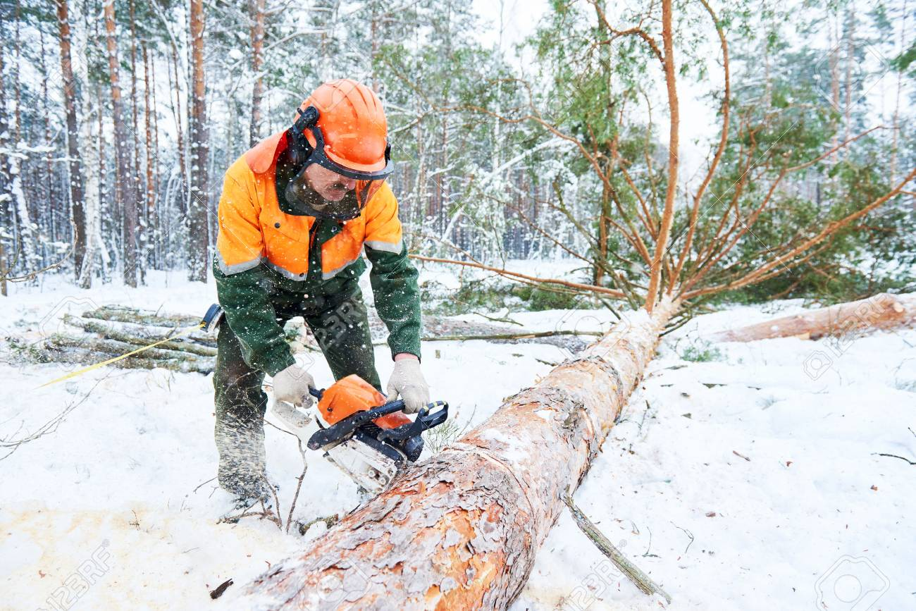 Lumberjack cutting tree in snow winter forest - 70443945