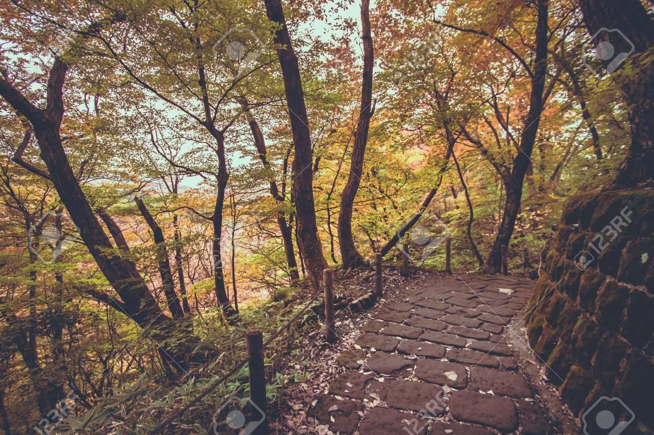 walkway path on nyoho mt with japanese maple leaf kirifuri stock