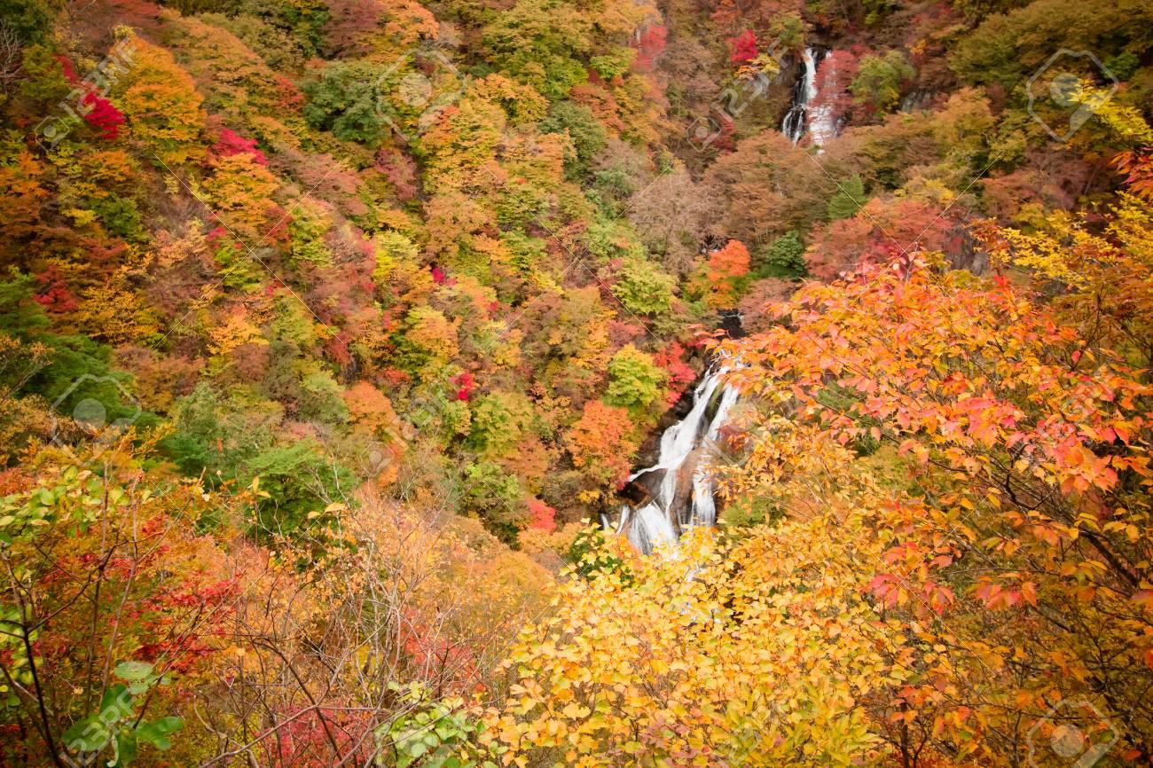 view of japanese maple leaf on nyoho mt with kirifuri waterfalls