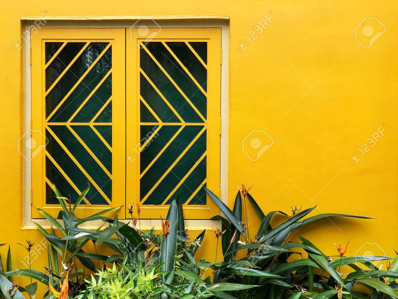 Bright Yellow Wall And Window With Grill And Green Plants Wallpaper Stock Photo Picture And Royalty Free Image Image 125474122