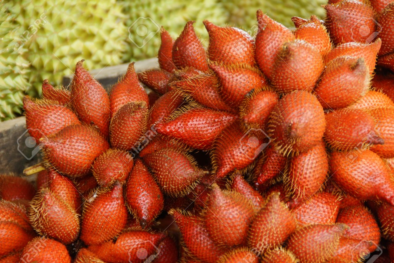 zalacca or sala, thai exotic fruit of thailand stock photo, picture