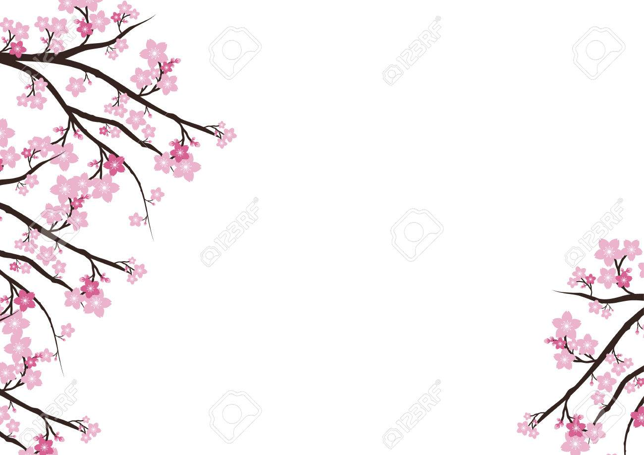 Cherry Blossom Flowers Background Sakura Pink Flowers Background